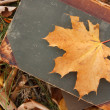 Yellow leaf on a book — ストック写真
