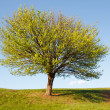 Green tree — Stockfoto