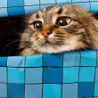 Stock Photo: Cat in gift box