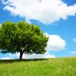 Lonely tree — Stockfoto