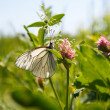 Butterfly on flower — Stockfoto #18044231