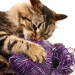 Cat and a ball of thread — Stock Photo #18044335