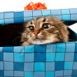 Cat in gift box — Stock Photo #18044757