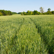 Green field — Stock Photo #18044767