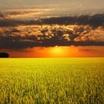 krásně krajina — Stock fotografie