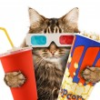 Stockfoto: Cat watching movie