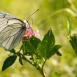 Butterfly on flower — Stockfoto