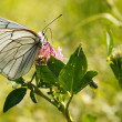 Butterfly on flower — Stockfoto #18045717