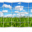 Stock Photo: Green field mosaic
