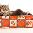 Funny cat in box isolated on white — Stock Photo