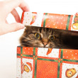 Funny cat in box isolated on white — Stock Photo #18046007