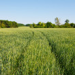 Green field — Stock Photo #18046555