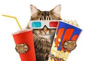 Kočka sledování filmu — Stock fotografie
