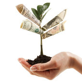 Money Tree on his hand of women. a symbol of financial success. — Stock Photo