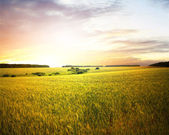 Beautifully summer landscape — Stockfoto