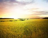 Vackert sommar landskap — Stockfoto