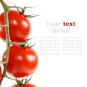 Close-up photo of tomatoes. — Stock Photo