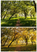 Autumn wood — Stock Photo