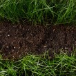 Green grass in soil — Foto Stock