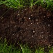 Green grass in soil — Stock Photo