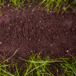 Green grass in soil — Stock Photo #24425795