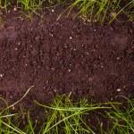 Green grass in soil — Stock Photo #24425795
