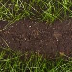 Green grass in soil — Stock Photo #24426067