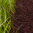 Green grass in soil — Stock Photo #24426147
