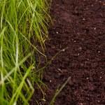 Green grass in soil — Stock Photo #24426147