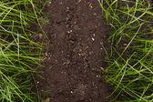 Zielona trawa w glebie — Zdjęcie stockowe