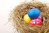 Påsk boet med ägg — Stockfoto