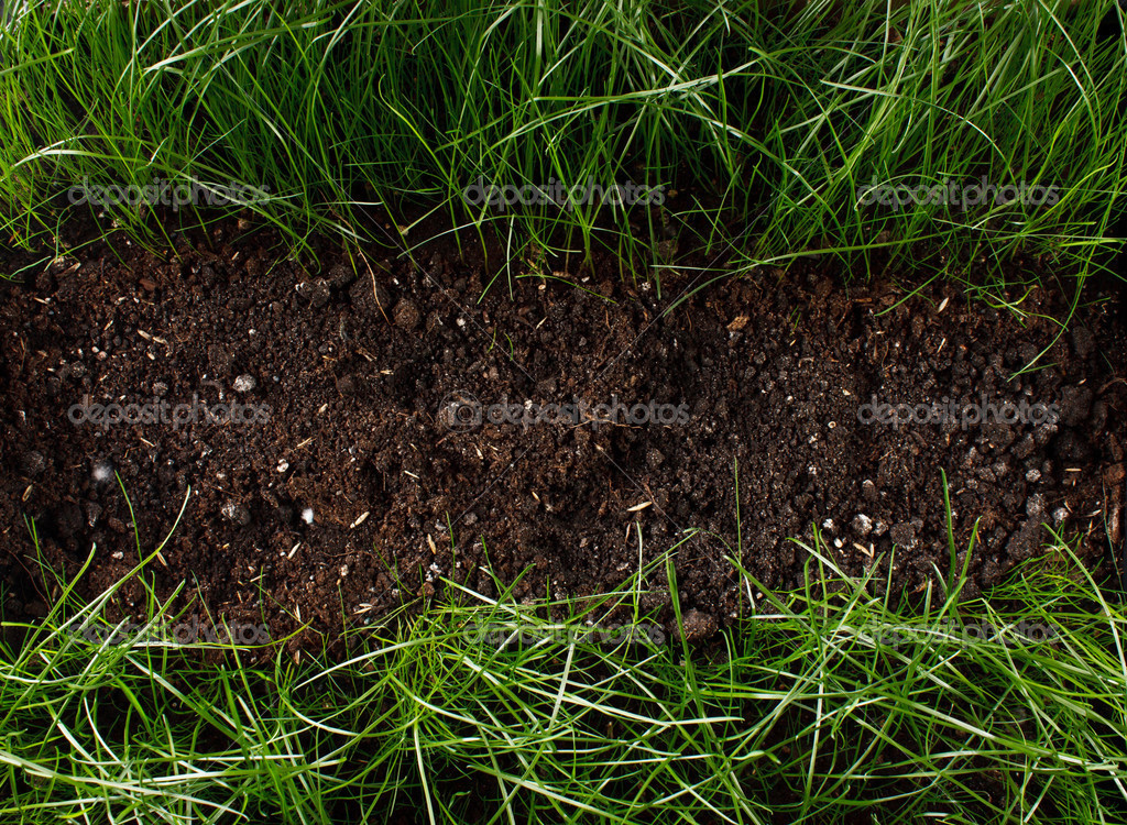 Green grass in soil stock photo puhfoto 24425671 for Soil and green