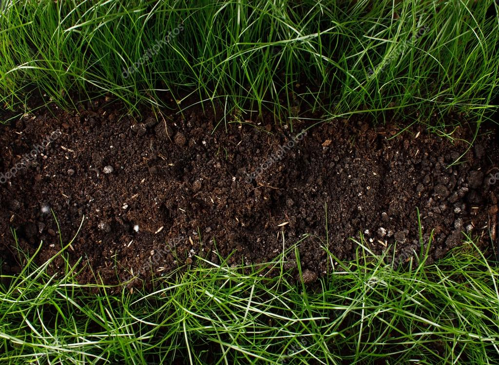 Green grass in soil stock photo puhfoto 24425671 for Where can i find soil