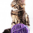 Kitten and a ball of thread — Stock Photo #4292510