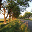 Stock Photo: Rural road on sunset