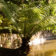 Stock Photo: Fern-tree in park of palace of pena, Sintra