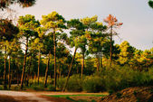Evening sunlight falls on an old forest road — Foto Stock