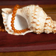 Amber necklaces on seashell — Stock Photo #34824185