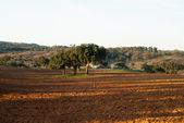 El paisaje en alentejo — Foto de Stock