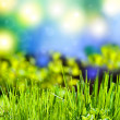 Stock Photo: Abstract summer background with grass