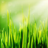 Fresh spring green grass and sun — Stock Photo