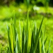 Grass. Eco nature — Stock Photo #28686785