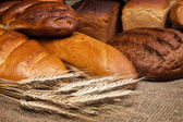 Variety of fresh bread with rye ears — Stock Photo