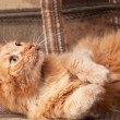 Red-haired playful cat lying on the sofa - Stock Photo