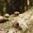 Snails on tree stem in forest - Stock Photo