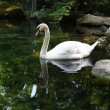 White swan — Stock Photo #33204465
