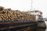 Timber ship — Stock Photo