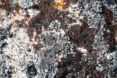 Background with the image of lichen — Stock Photo