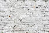 Vintage white background brickwall — Stock Photo