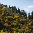 Autumn in the Mountains — Stock Photo
